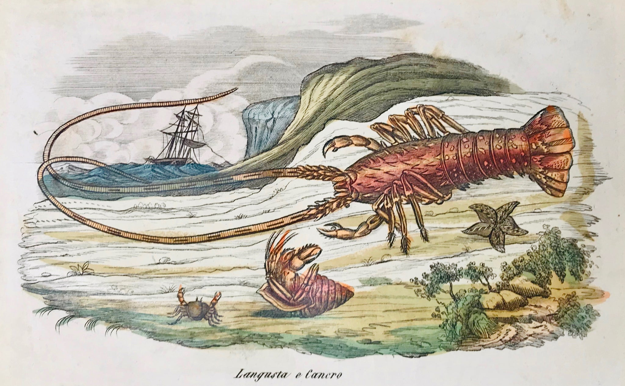 """Langusta e cancero"" - Crawfish and Crabs.  Originally hand-colored etching by an anonymous artist.  Italian, ca. 1860. A few signs of age and use..  12 x 19 cm (ca. 4.7 x 7.5"")"