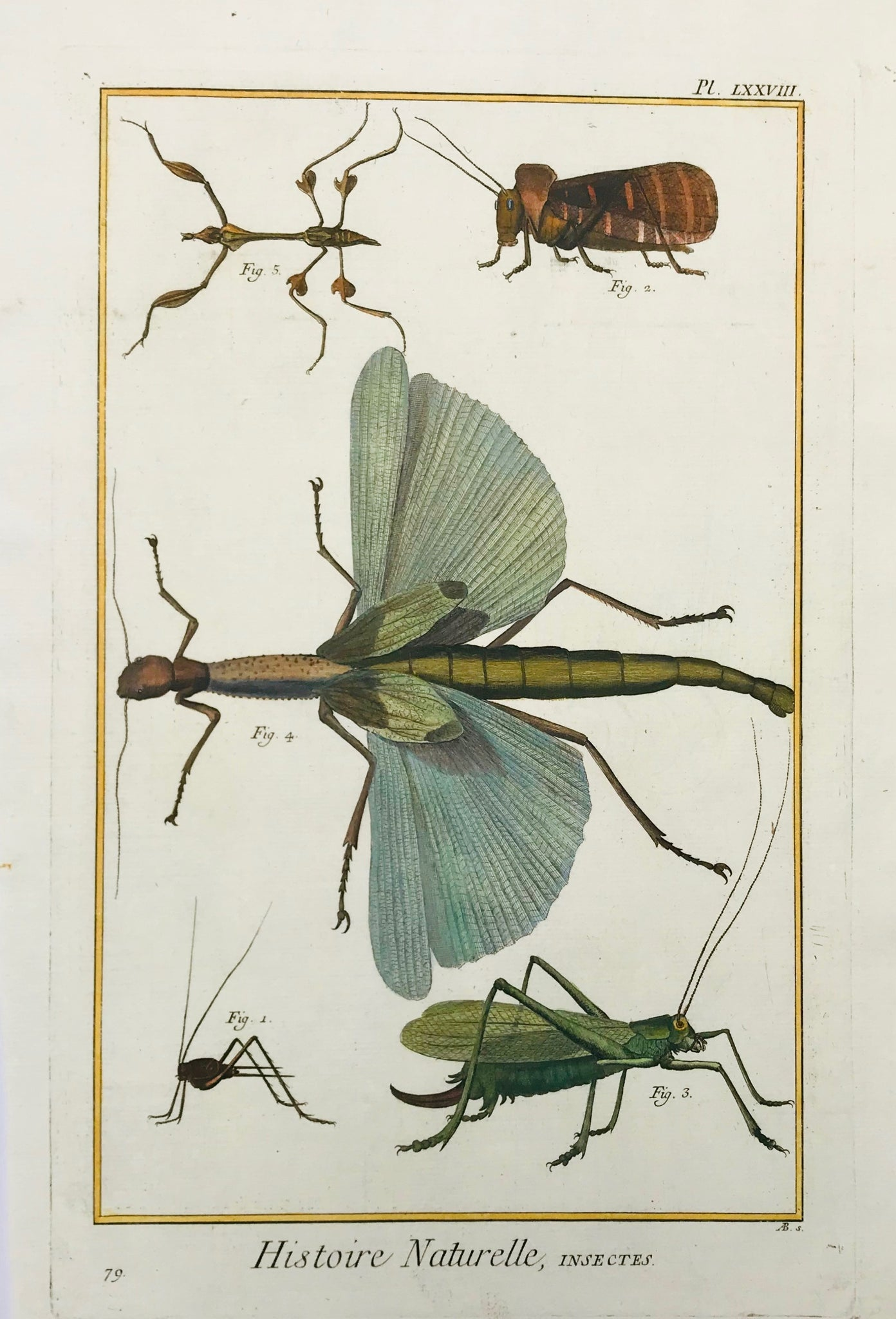 "No Title.  Copper etching from ""Histoire Naturelle"", published 1751 in Paris. Modern hand coloring. A few very minor spots."