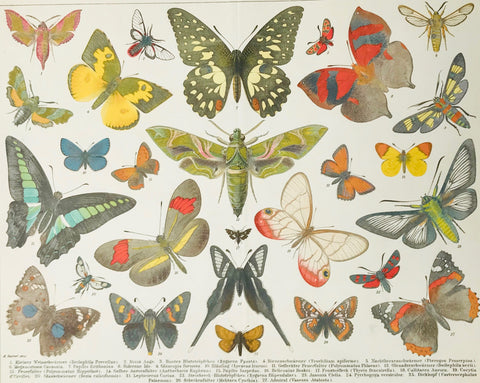 """Schmetterlinge I""  Lithograph made after a painting by A. Reichert. Published 1895. Below are the names of the butterflies. Vertical centerfold."