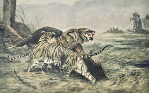 Tigers and elephants