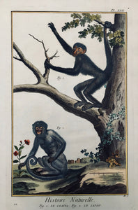 "Monkeys: Fig. 1. Le Coaita. Fig. 2. Le Sajou.  Copper etching from ""Histoire Naturelle"", published 1751 in Paris. Modern hand coloring."