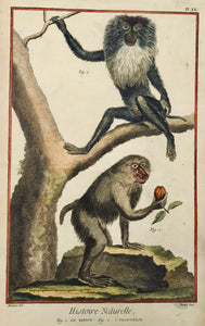 "Monkeys: Fig. 1. Le Papion. Fig. 2. L'Ouanderou  Copper etching by Bernard after Martinet for ""Histoire Naturelle"", published 1751 in Paris."