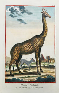 """Histoire Naturelle - La Giraffe - Le Chevrotin""  Hand-colored copper etching. Published in ""Encyclopedie"". Paris, ca. 1750"