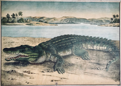 "Title on reverse side: ""Krokodil"". Crocodile.  Chromolithograph by Meinhold. Dresden. Ca. 1890. Monogrammed in lower left corner: entwined letters ES or SE.  This Imperial Folio lithograph of a crocodile was printed in color and used as a wall chart in schools. It is hemmed with a linen cloth border. One visible but hardly disturbing fold across upper jaw. A tiny bit knittered here and there as to be expected for an extra large print of nearly 120 years of age"