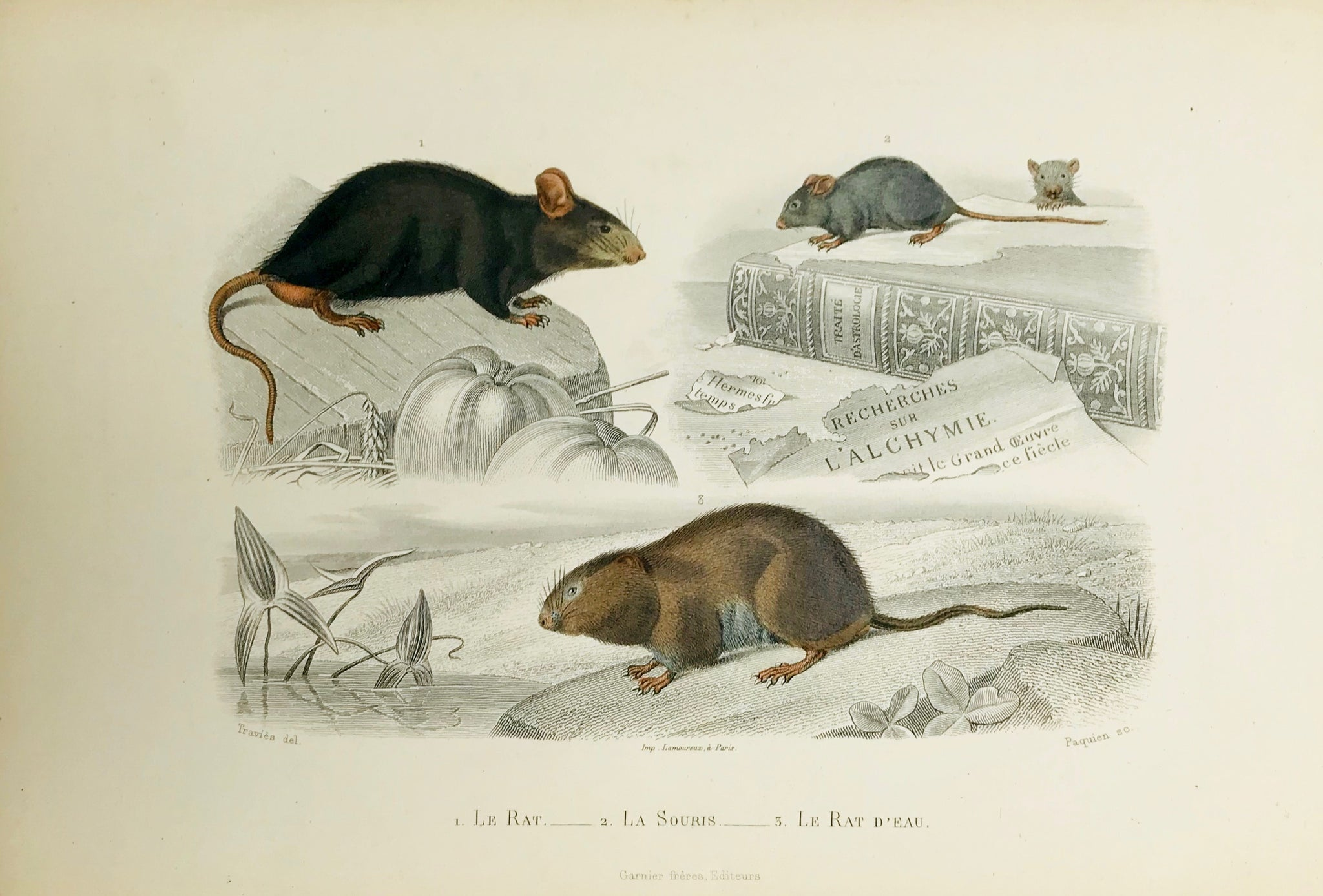 1. Le Rat 2. Le Souris 3. Le Rat D´eau  Wood engraving edited by Garnier Freres in Paris ca 1860. Original hand coloring.
