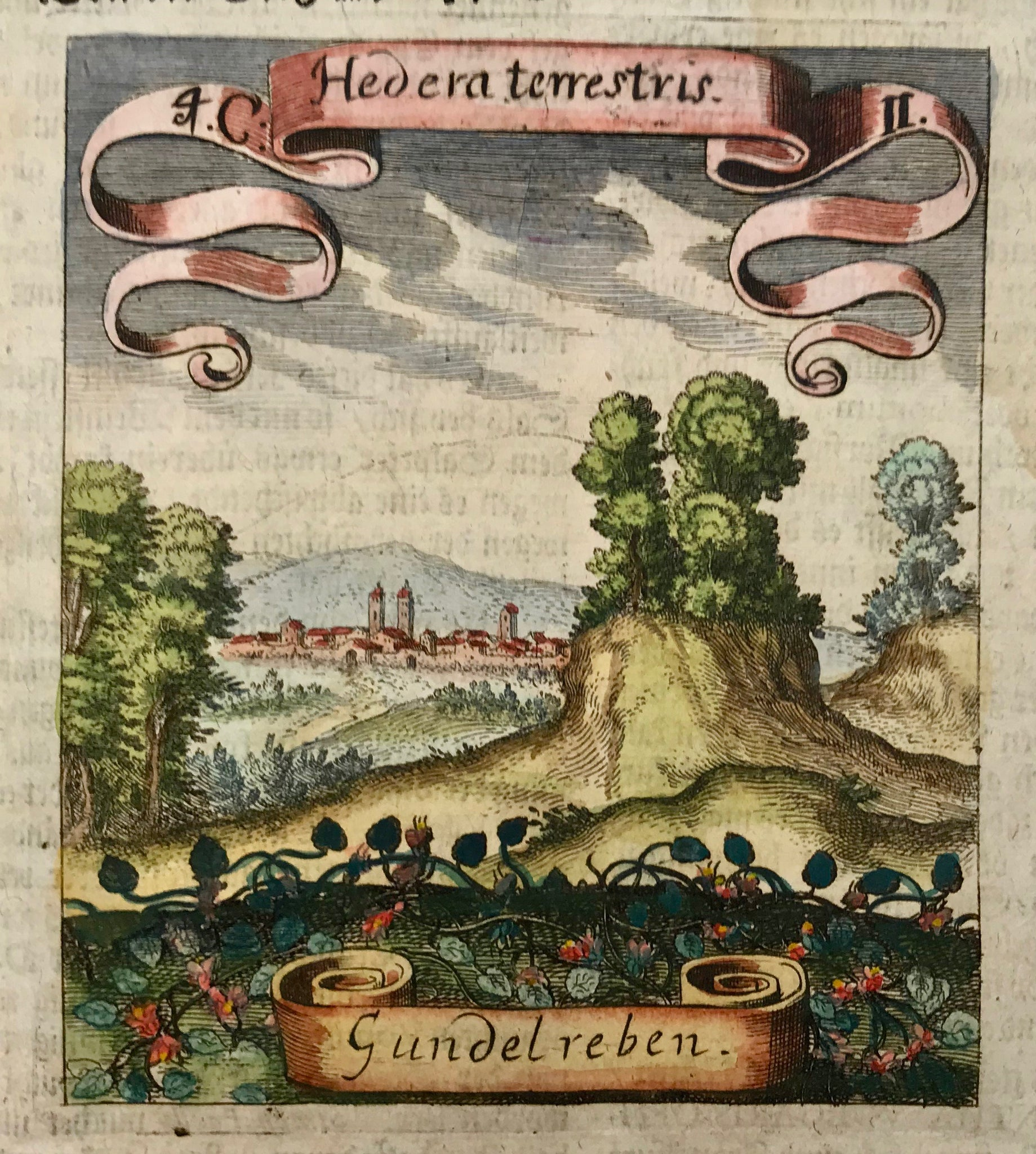 "Hedera terrestris-Gundelreben  Botanical Prints by Matthaeus Merian Matthaeus Merian (1593 Basel - Bad Schwalbach 1650), famous for his ""Topographies"" and his ""Theatrum Europeum"" was also a very distinguished engraver and publisher of many other varieties of books and prints."