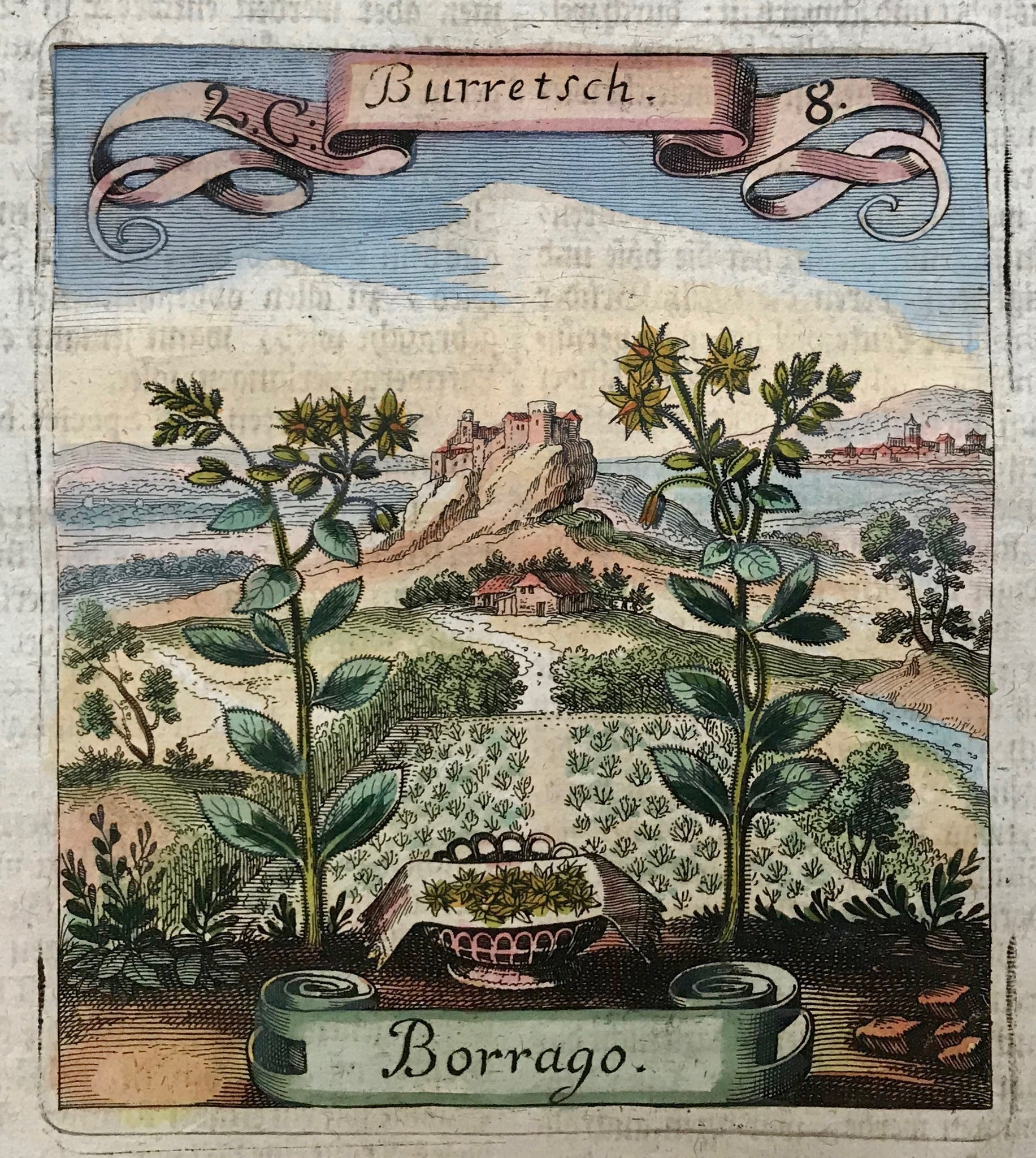 "Borrago - Burretsch  Here we get to know him an author of simply wonderful descriptions of plants and flowers used in medicine. His specialty was to set the flowers oversize into a landscape, adorning the print with flying ribbon in which the name of the plant or flower is engraved. The book in which these little gems were published was called ""Die fruchtbringende Gesellschaft"""