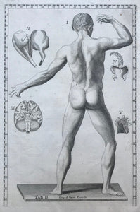 "The following anatomy copper engravings are by Gaetano Petrioli (1720-1760)from ""Tavole Anatomiche"" published in Rome by Stamperia di Antonio de Rossi 1750.  The prints are in very good condition unless otherwise mentioned."