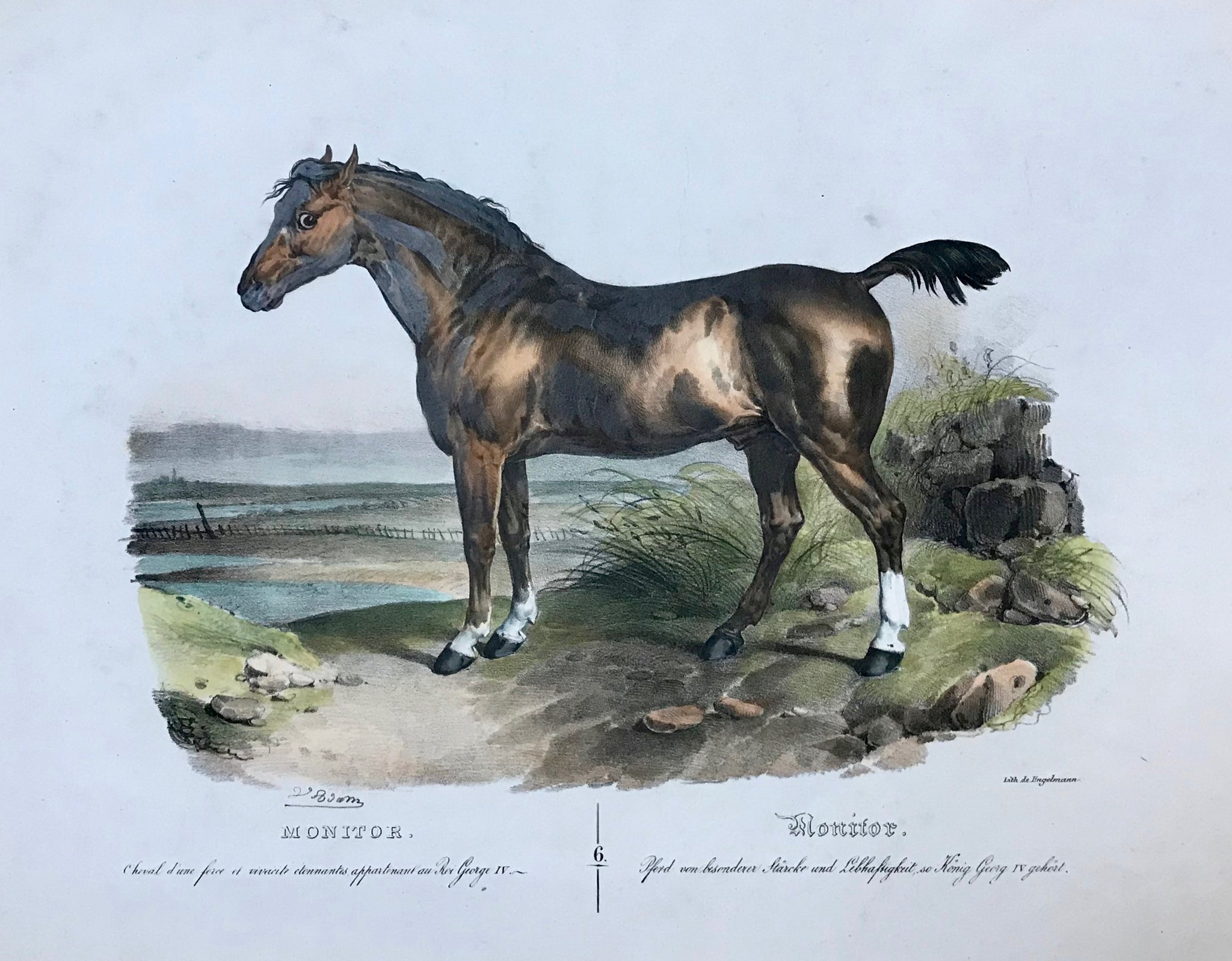 """Monitor - Pferd von besonderer Staerke und Lebhaftigkeit, so Koenig Georg IV gehoert""  Large folio print. Hand colored, heightened with gum arabic lithograph  by Gottfried Engelmann (1788-1839)  After the painting by Victor Adam (1801-1866)  Nr. 6 in a series of horses by Victor Adam  Two minor pleats above horse and to its side. Minor traces of age and use."