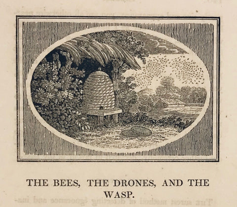 "The Bees, the Drones, and the Wasp  Copper engraving ca 1820. Below the image is text from ""Aesop´s Fables"" that continues on the reverse side.  A nice image of a hive with a swarm of bees to the upper right."