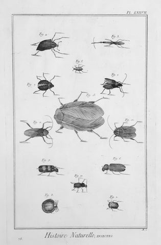 "No Title.  Copperplate etching from ""Histoire Naturelle"", published 1751 in Paris."