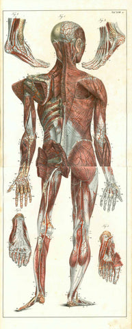 Medicine, Anatomy, Hands and feet