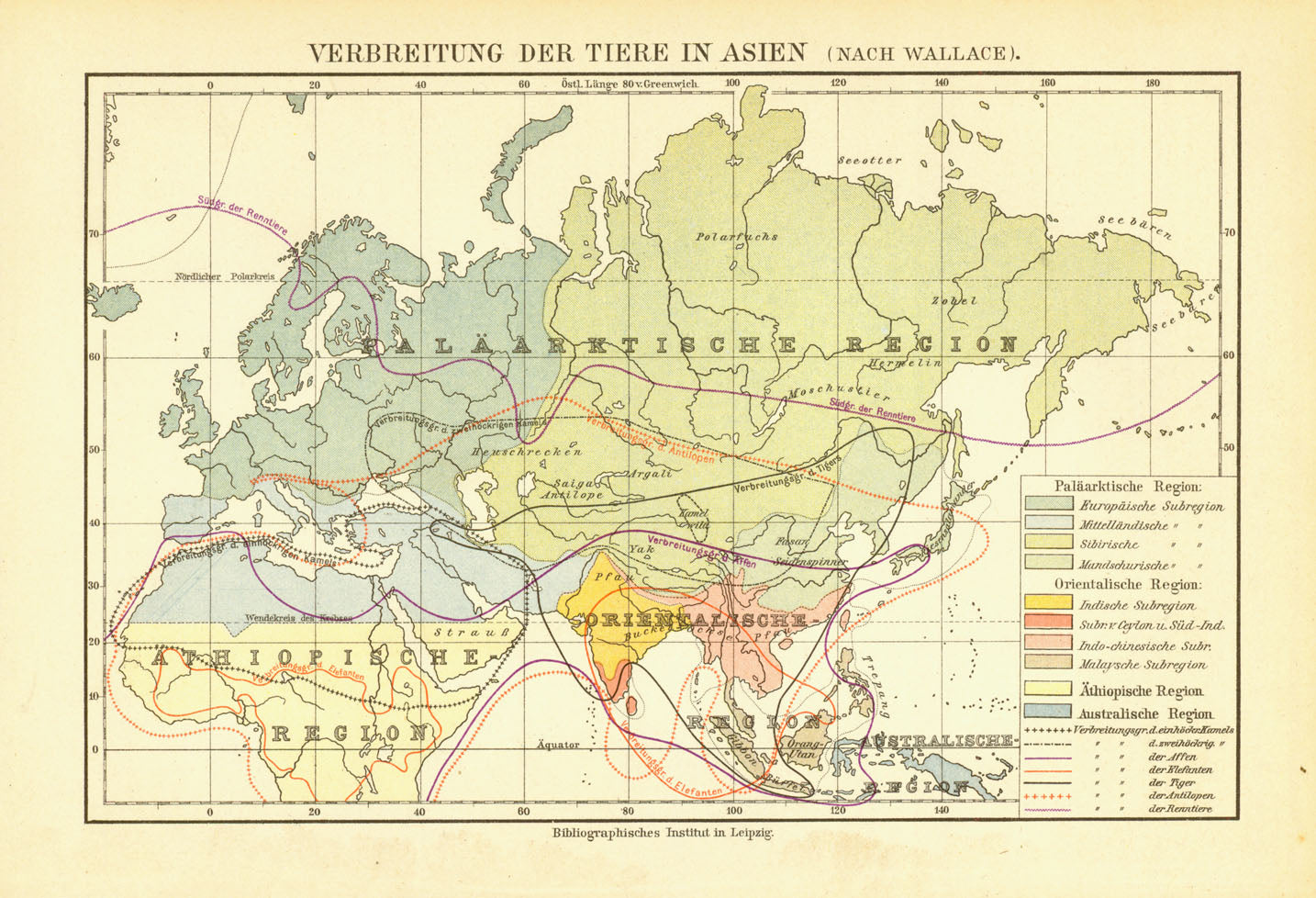 """Verbreitung der Tiere in Asien"" ( nach Wallace )  Interesting map showing the distribution of animals such as tigers, reindeer, elephants, monkeys and others in Asia. Published 1895."
