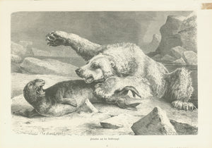 """Polarbaer auf Robbenjagd""  Original antique print   Wood engraving by Ludwig Beckmann published 1880. On the reverse side is an image showing the most common predators."