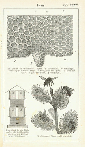 """Bienen""  Wood engravings published 1890.  Original antique print , Bees"