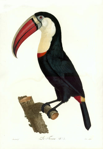 """Le Toco N. 2""  Stipple engraving by Jacques Louis Perée  After the painting by Jacques Barraband (1768-1809)  Extremely fine original hand coloring  Published in ""Histoire naturelle des oiseux de paradis et des rolliers,  suivi de celles des toucans et des barbus"" By François Levaillant.  Paris, 1801-1806.  The original hand coloring is exquisite.  Grand folio.  59,7 x 41 cm (ca. 23.5 x 16.1"")  Right image: ""Le Tocan No. 3""  Stipple engraving by Jacques Louis Perée  After the painting by Jacques Barraband"