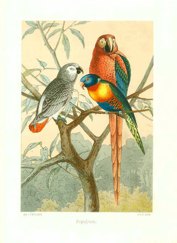 """Papageien""  ""Papageien"" Three parrots looking at you from the branches of a tree  Colored lithograph after the drawing by Carl Friedrich Seidel.  Seidel was active in Dresden, Germany in the sixties of the 19th century.  Publishing details unfortunately unknown."