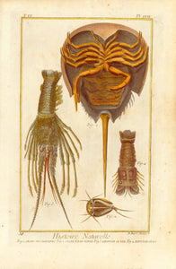 """Fig. 1. Crabe des Moluques Fig. 2 Crab d'Eau Douce, Fig. 3 Ecrivess de Mer Fig. 4 Ecrivisse Crabe""  Copper etching by Benard after Martinet for ""Histoire Naturelle"", published 1751 in Paris. Modern hand coloring. Margin edges show light browning. and minor spottng. A few very light spots in image."