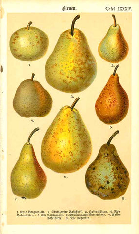 """Birnen""  Chromolithograph of various sorts of old pears with their German names. Published 1890.  Original antique print"