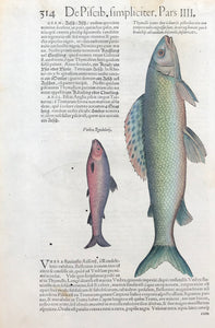"The fish on the left is an ""Aesche"" in German and on the right is a ""Forelle"" (trout).  Woodcut published ca 1585. Reverse side is printed with three fish images and text. Fine, recent hand coloring. Print has small, scattered worm holes in lower part of image. Small repairs in upper right margin corner.. 400 years have left their signs of age!  Page size: 34 x 22 cm ( 13.3 x 8.6 "")"