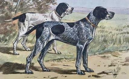 "Le Braque Bleu D'Auvergne  Hunting Dogs  All Prints are in Very Good condition unless otherwise noted.  The following series of dog prints are ""photogravures"" printed in color after the original watercolors by P. Mahler."