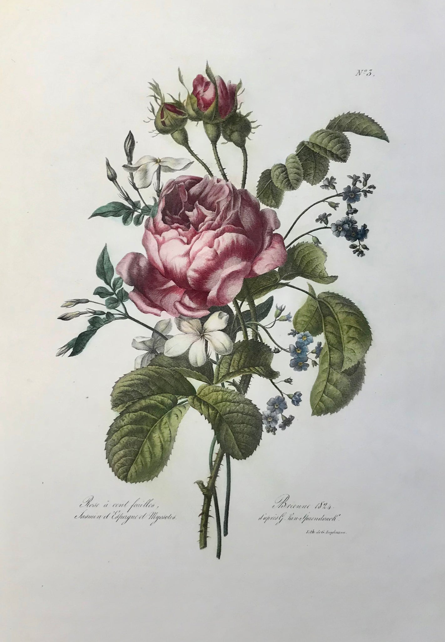 """Rose à cent feuilles - Jasmin d'Espagne et Myosotis""  A rose flower bouquet with a Centifolia-rose, Spanish jasmine and forgetmenot  Delightful lithograph by Gottfried (Godefroy) Engelmann (1788-1839)  After Gerard van Spaendonck (1746-1822)  Brienne, dated 1824  Very clean and very attractive. Minimal restored faults in margins.  Sheet size 36 x 26 cm (ca. 14.2 x 10.2"")  $ 950.00  Order Nr. EXCLUSIVE249238"