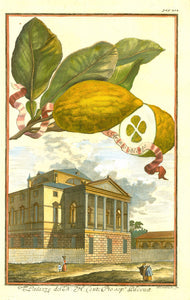 """Aranzo oblongo""  ""Palazzo del N. H. Conte Pio sop. Padoua""  Today this palazzo is titled ""Villa Molin"". It is in Mandria, Ponte della Cagna., Italy, Volkamer, Hesperides, Citrus Fruits"