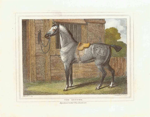 """The Hunter""  Hand-colored stipple copper engraving by Samuel Howitt (1756-1822)  A Hunting horse  Published in London, dated 1799"