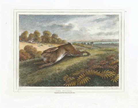 """Hare running""  Hand-colored stipple copper engraving by Samuel Howitt (1756-1822)  A hare running for his or her life  Published in London, dated 1799"