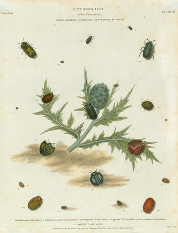 "Copper etchings from: ""Animated Nature"" (London,1804-1809) each precisely dated.  Exquisite modern hand coloring. *** ""Entomology Order Coleoptera Genus Opatrum G,. Tritoma G. Tetratoma G. Cassida""  Published Sep. 1813 Artichoke in the center."