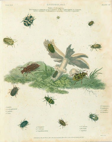 "Insects, Copper etchings from: ""Animated Nature"" (London,1804-1809) each precisely dated.  Exquisite modern hand coloring. *** ""Entomology Order Coleoptera Genus Byrrhus G. Anthrenus G. Cistella G. Sylpha G. Melyris""  Published Dec. 1813."