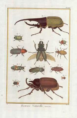"No Title. Various beetles.  Copper etching from ""Histoire Naturelle"", published 1751 in Paris.  Printed slightly diagonaly on paper."
