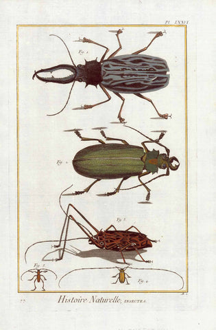 "No Title. Various Beetles.  Copper etching from ""Histoire Naturelle"", published 1751 in Paris."