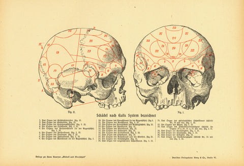 """Schaedel nach Galls System bezeichnet""  Zincograph published 1900. Below the images are the corresponding numbers with description of the brain. Natural age toning with light browning of margin edges.  Original antique print ""Schaedel nach Galls System bezeichnet""  Zincograph published 1900. Below the images are the corresponding numbers with description of the brain. Natural age toning with light browning of margin edges.  Original antique print , Schädel,"