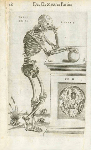"Medicine, Anatomy, Bones, ""Des Os & autres Parties""  About Bones and other Parts (of the human body)  Copper engraving by Juan Valverde de Hamusco (Giovanni Valverde de Amusco) from  ""La anatomia del corpo Umano"", the Italian edition published in Venice in 1580 by Giunta.  Juan Valverde de Hamusco (also Amusco) (c.1525-c.1588) was a a Spanish anatomist.  French edition."