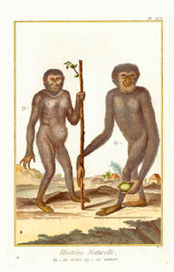 "Fig. 1. Le Joko. Fig. 2. Le Gibbon.  Copper etching for ""Histoire Naturelle"", published 1751 in Paris. Modern hand coloring. Clean and attractive"