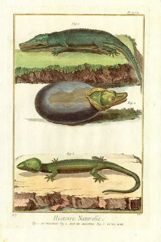 "Reptiles, Crocodiles, Fig. 1 Le Crocodile. Fig. 2. Oeuf de Crocodile. Fig. 3. Le-Toc-Kaie  Copper etching from ""Histoire Naturelle"" published 1751 in Paris"