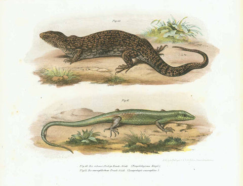 "Australia - Skink - Lizard ""Der schwarzfleckig Rauch - Scink. (Tropidolepisma Kingii)""  Indonesia - Tailand - Philippines - Taiwan ""Der smaragdfarbene Prunk - Scink. (Lamprolopis smaragdina)""  Lithograph printed in color  Published in ""Bilder-Atlas aller Reptilien und Amphibien weltweit""   by Leopold Joseph Fitzinger (1802-1884)  Vienna, 1867  Very good condition, Original antique print"