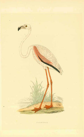 """Flamingo""  Wood engraving printed in color with hand-colored highlights. Published ca 1860."