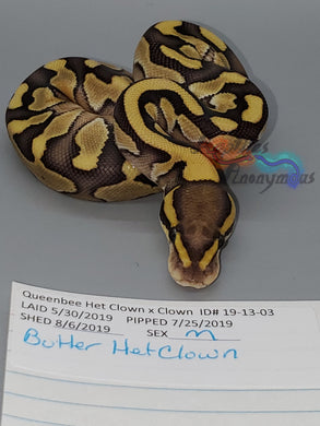 Male Butter Het Clown - Item #  19-13-03
