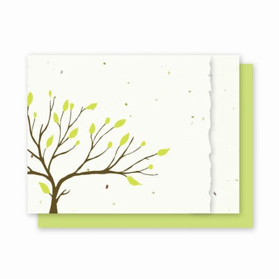 Grow A Note All Occasion Tree With Deckled Edge Cards - green envelopes - pack of 4 cards
