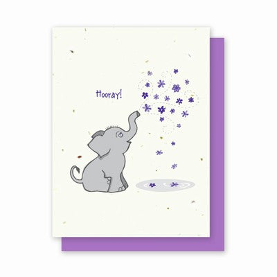 Grow A Note Hooray Cards - purple envelopes - pack of 4 cards