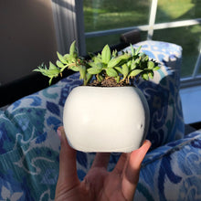 Load image into Gallery viewer, Whale Succulent Planter