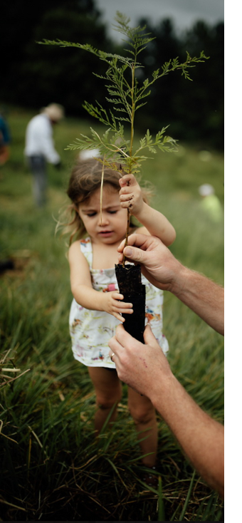 Little girl planting a sapling tree to fight climate change through reforestation and regenerative farming