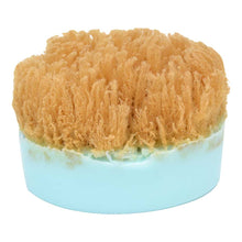 Load image into Gallery viewer, Ocean Sponge Shea Butter Soap-Free Shipping