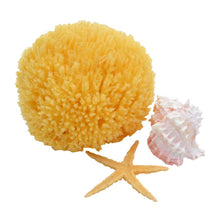 "Load image into Gallery viewer, Natural Sea Sponges 5""-6""- FREE Shipping"