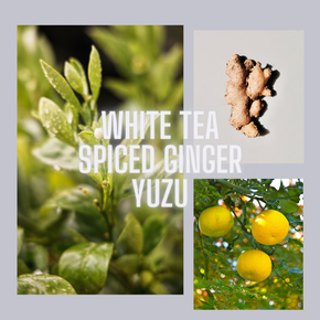 Après-Midi (white tea, spiced ginger, yuzu candle)