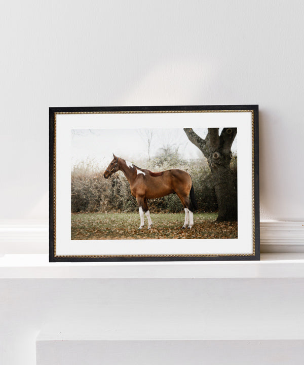 Georgina Preston Equestrian Portrait Photography Paint Horse