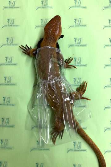 OOAK Lizard Invisible Virgin Gown