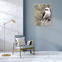 Load image into Gallery viewer, King of the Bush Kookaburra